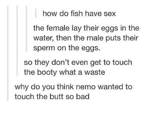 butt, fish, and funny image