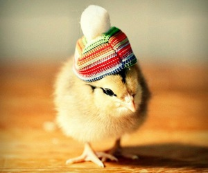 cute, Chick, and Chicken image