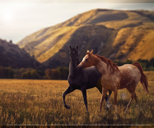 autumn, horses, and playing.... image