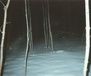 snow, forest, and grunge image