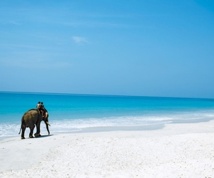 beach, elephant, and summer image