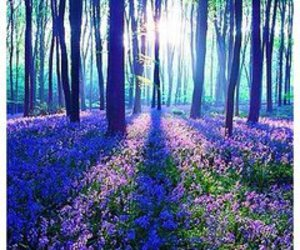 amazing, flowers, and forest image