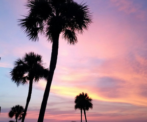 florida and palm trees image