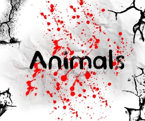 animals, maroon 5, and music image