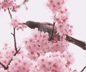 animal, flower, and japan image