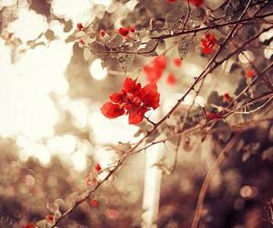 flor árbol paisaje image