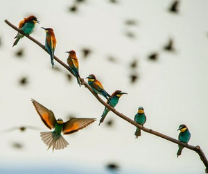 amazing pictures, amazing photography, and beautiful birds image