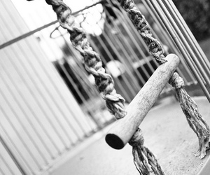 black and white, photography, and cage image