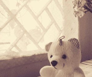 bear, window, and cute image