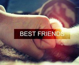 cat, best friends, and friends image