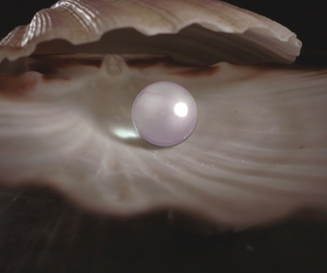 pearl, shell, and beautiful image