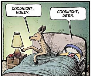 funny, honey, and deer image