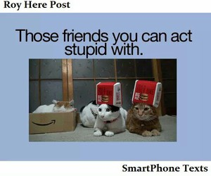 friends and cat image