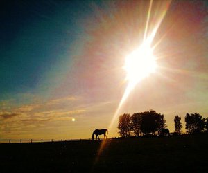 horse, photography, and sunset image