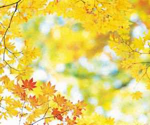 autumn, leaves, and yellow image