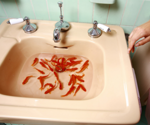 fish, sink, and vintage image
