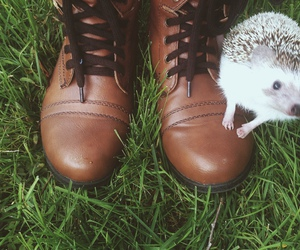 brown, hedgehog, and nature image