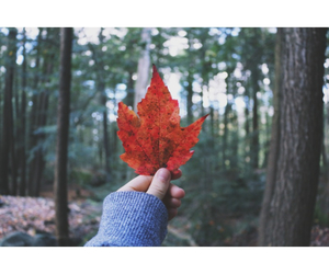 autumn, canada, and chilly image
