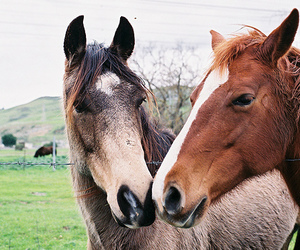 horse, animal, and photography image