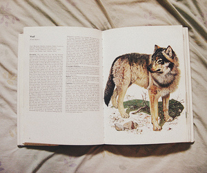 books and wolf image