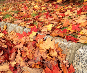 autumn, curb, and leaves image
