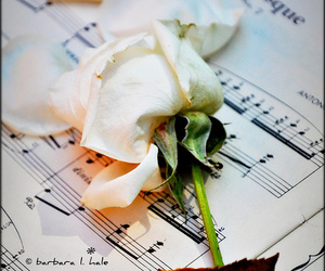 flickr, flower, and rose image