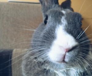 bunny, retro, and cute image