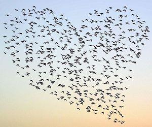 bird, heart, and sky image