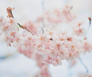 beautiful, blooms, and flowers image