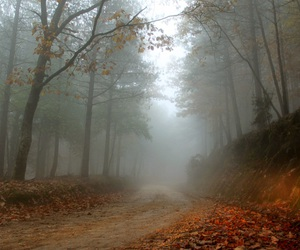 autumn, woods, and path image