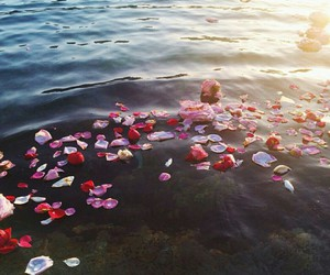 flowers, morning, and sea image