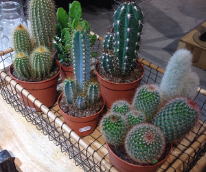 cactus, green, and nice image