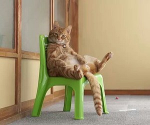 cat, funny, and sit image