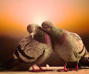 bird and love image