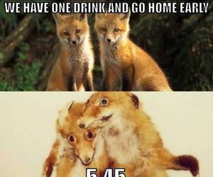 party, drunk, and fox image
