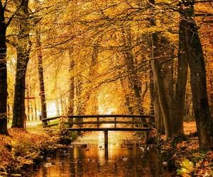 autumn, bridge, and tree image