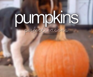 autumn, beagle, and dog image