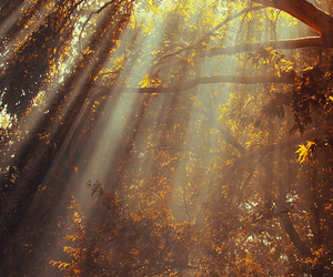 autumn, forest, and beautiful image