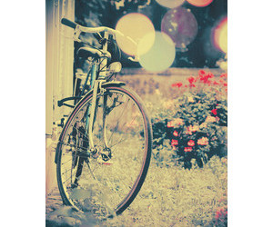 bicycle, flowers, and vintage image
