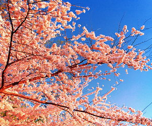 spring and tree image