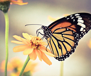 flower, butterfly, and nature image