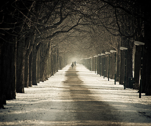 photography, snow, and trees image