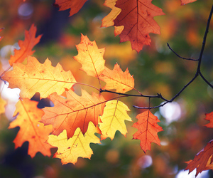 autumn, leaves, and nature image