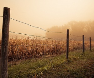 Barbed Wire and fence image