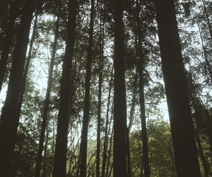 forest, light, and sky image