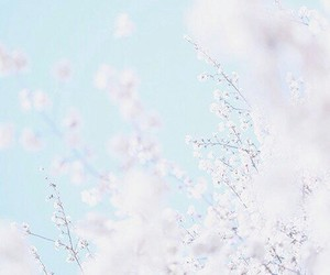 japan, spring, and white flowers image