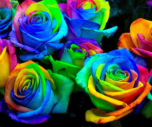 colors, rainbow, and flowers image
