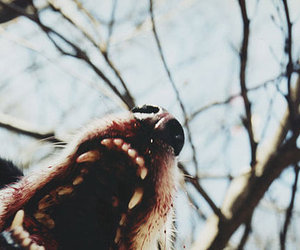 wolf, blood, and animal image