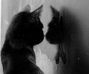 cat, black, and mirror image