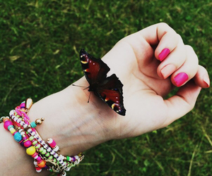 butterfly, colors, and summer image